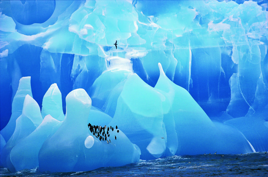 Blue ice and penguins (c) Cherry Alexander, Wildlife Photographer of the Year in 1995