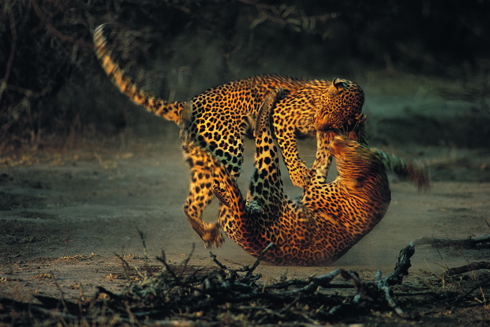 Flash fight (c) Richard du Toit, from the 1995 contest