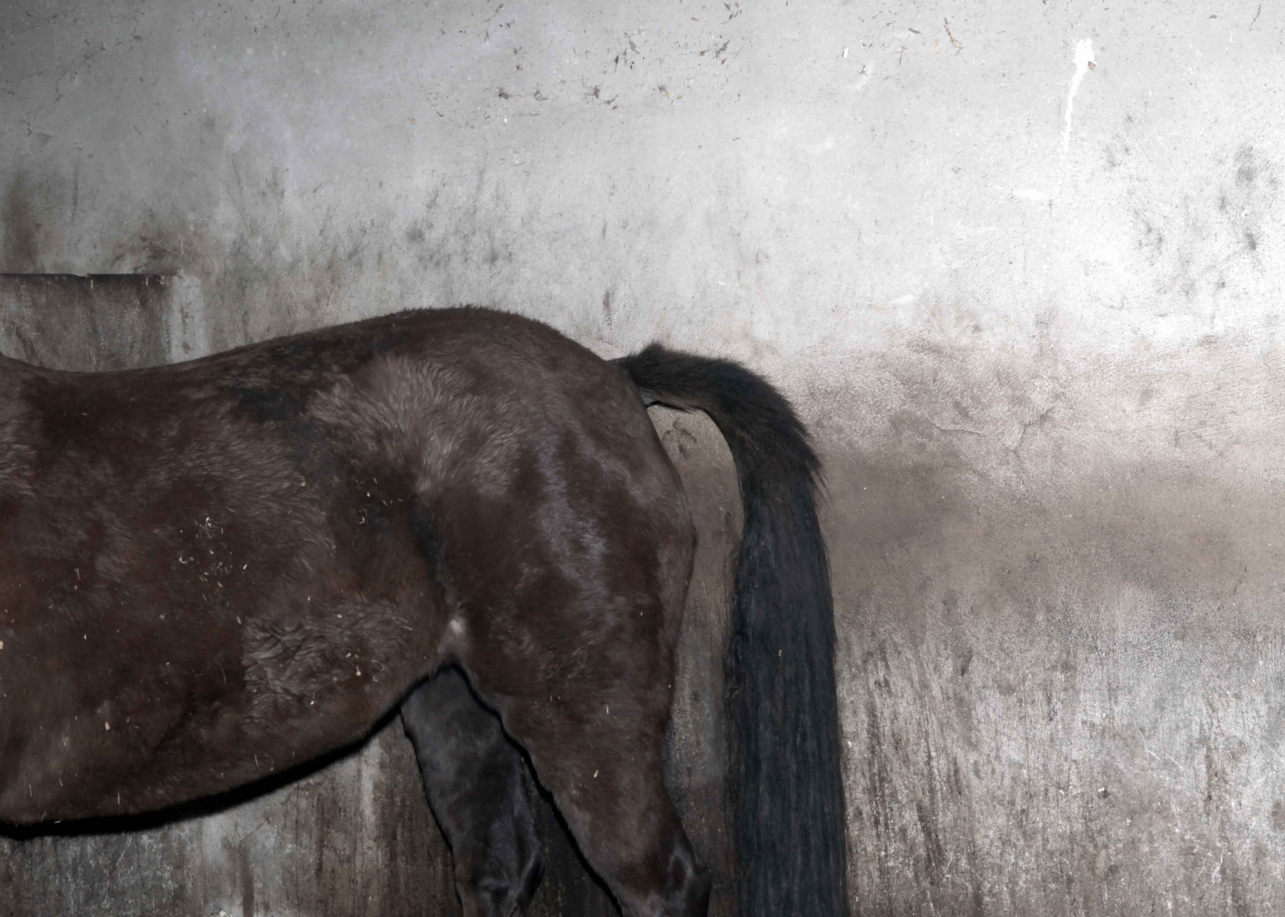 12_From the series Horse_Identification