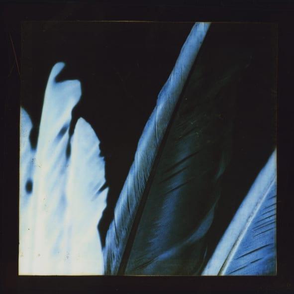 Birds Of Many A Feather IV © Jennifer Pattison