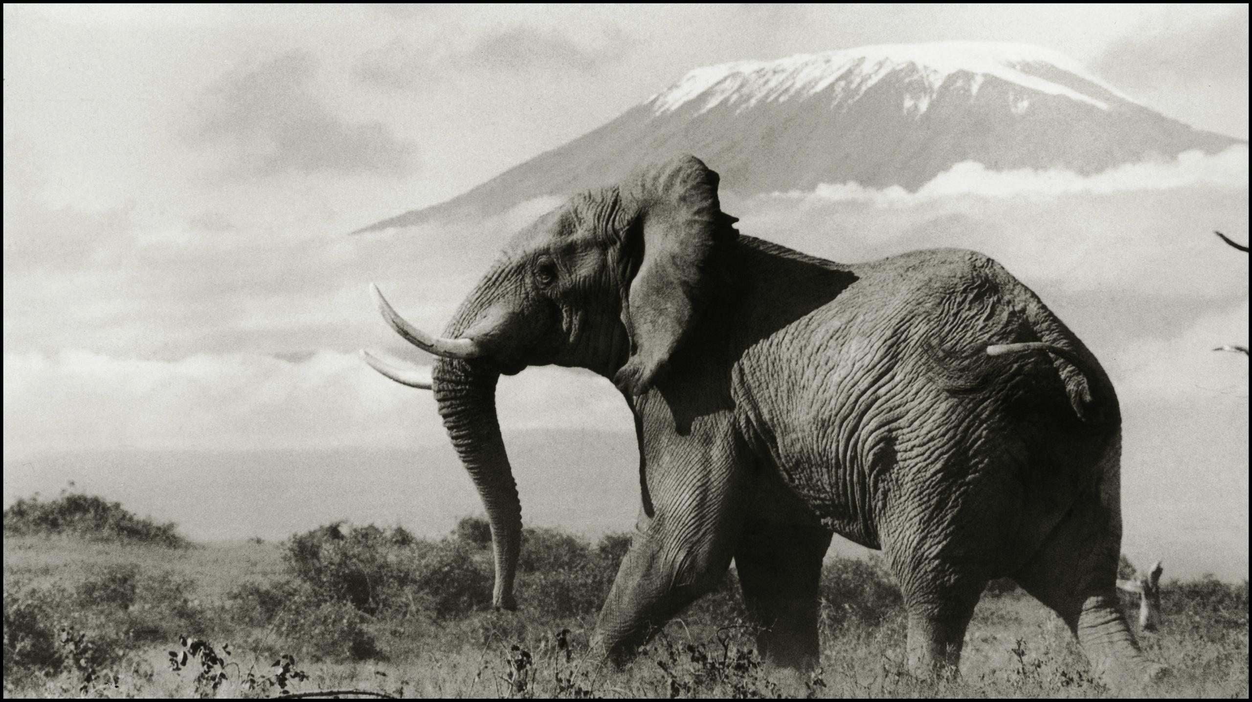 Snows of Kilimanjaro, 1972