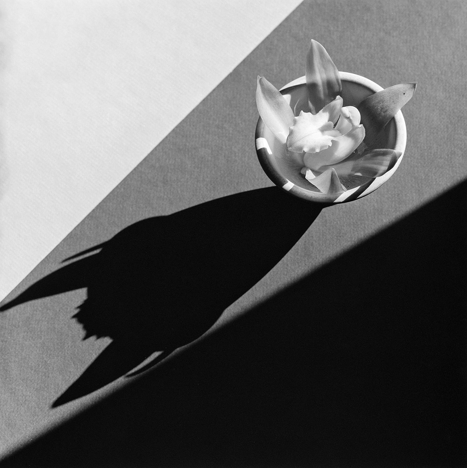 Orchid, 1987 © Robert Mapplethorpe Foundation / The J. Paul Getty Museum