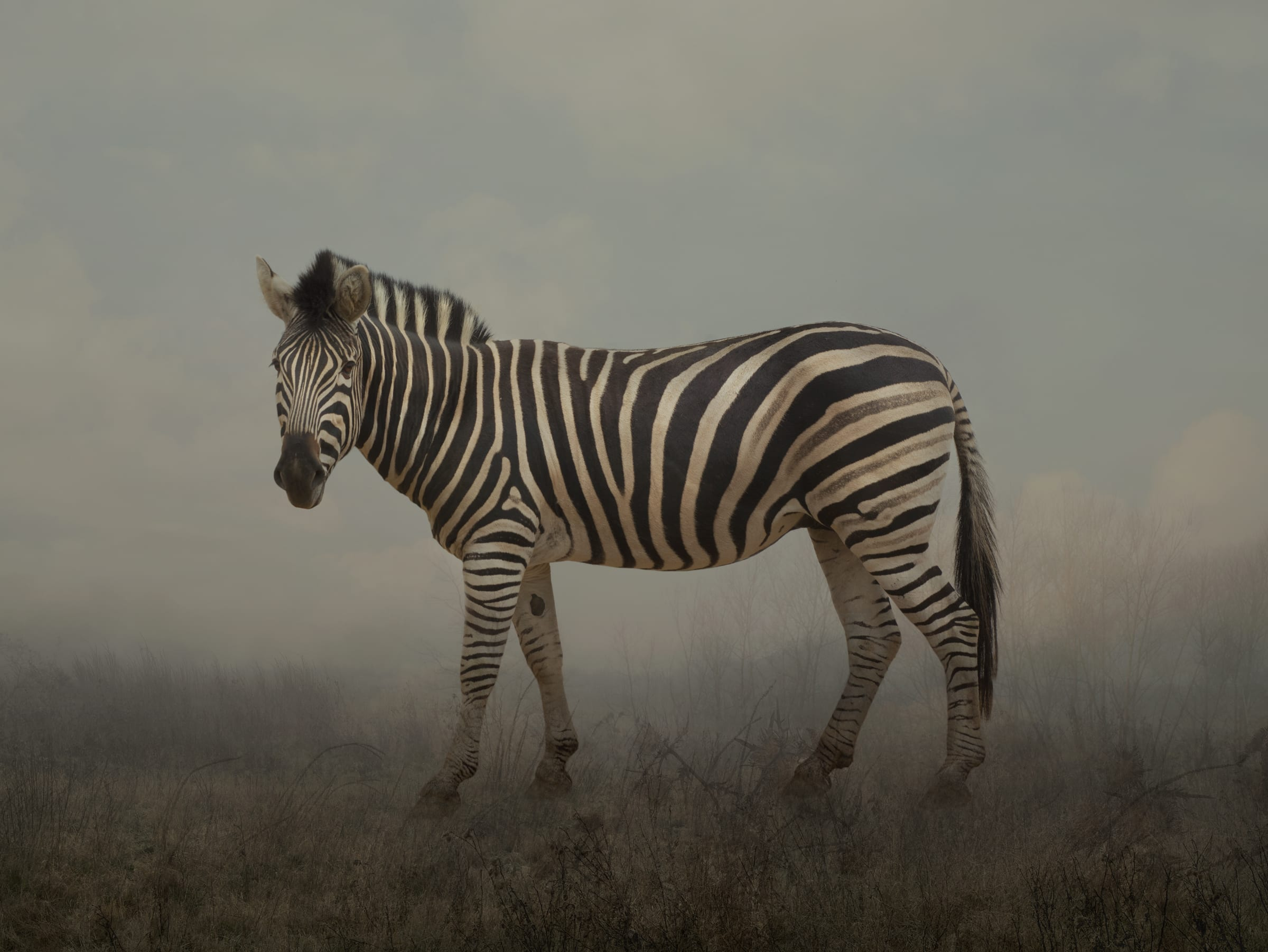 30 964 Free images of Wildlife