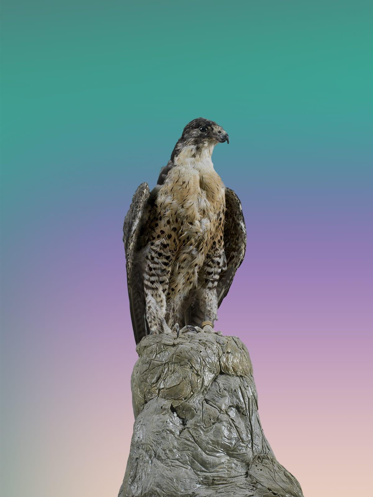 © Christto & Andrew_Birds of Paradise II