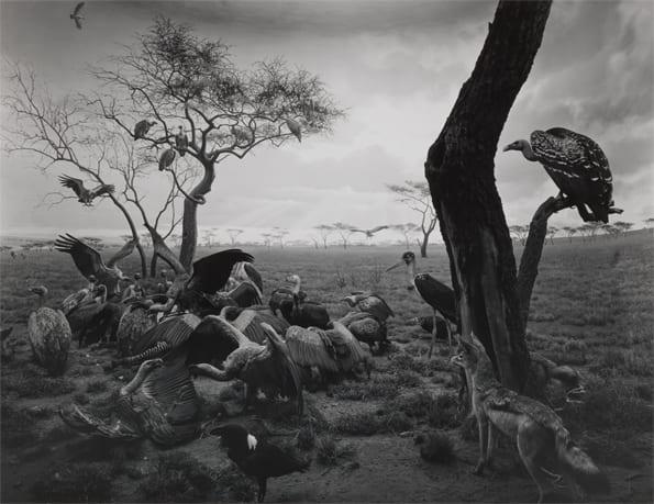 595_hyena-jackal_vulture_1976_gelatin_silver_print_c_hiroshi_sugimoto-1