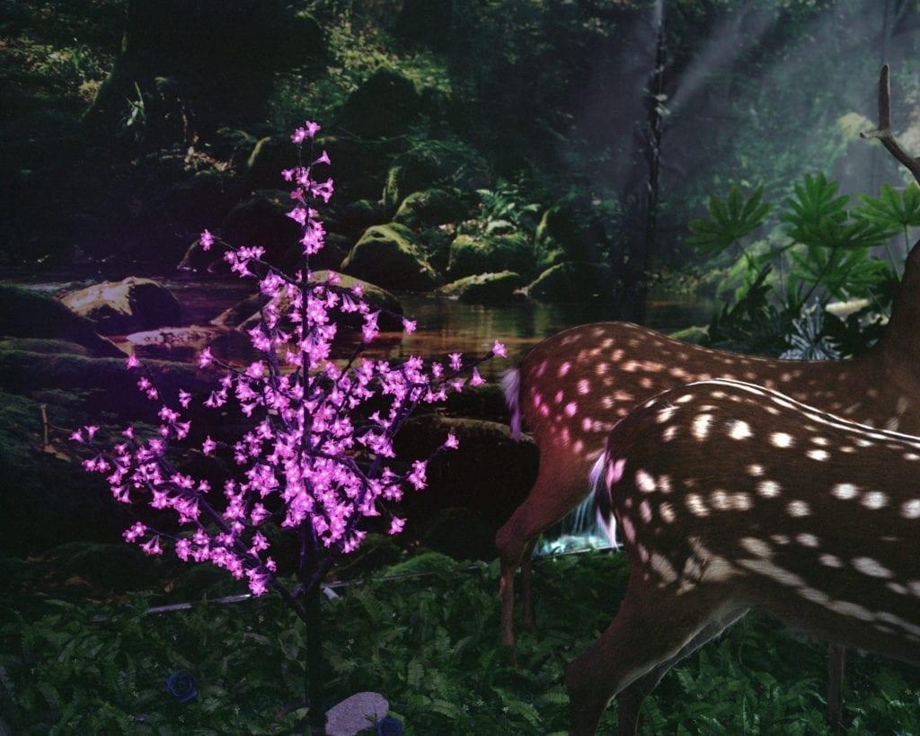 deer-forest-2013