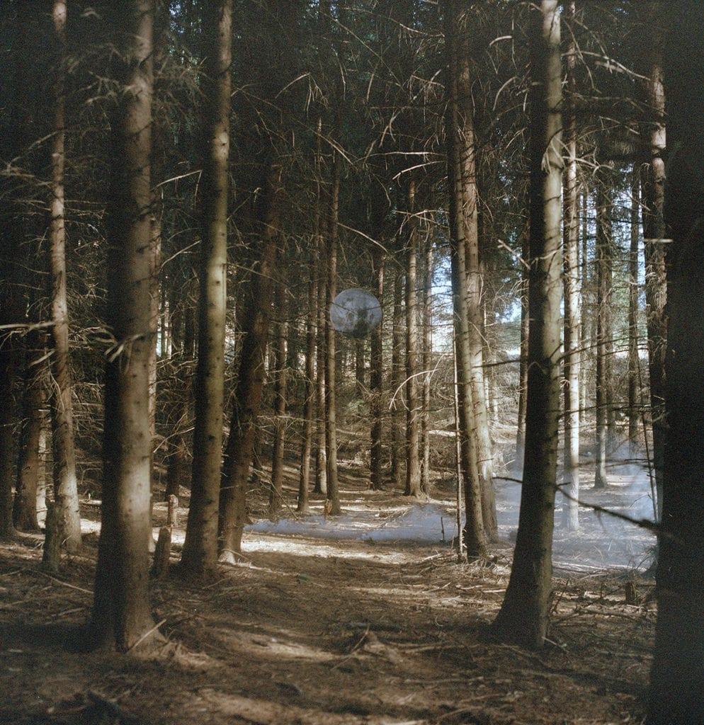 lunar-forest-from-the-series-youth-without-age-life-without-death