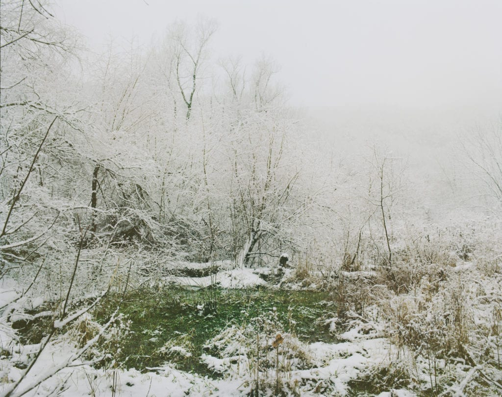 winter-forest-2014