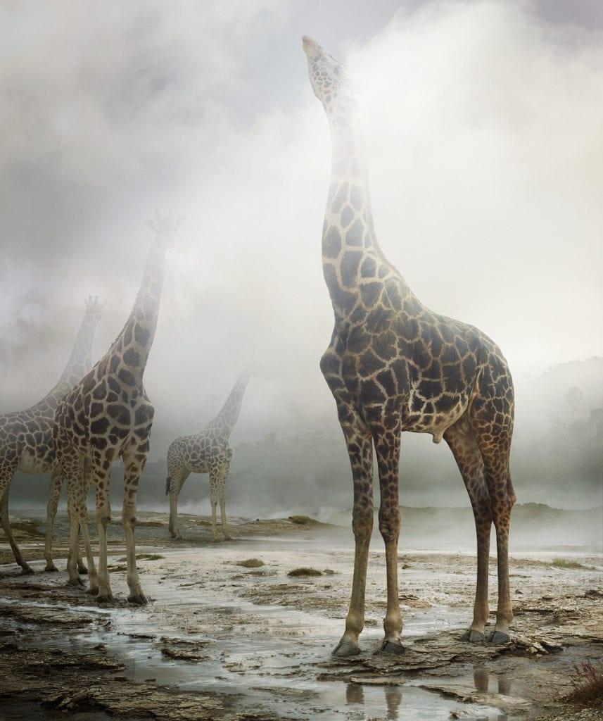 Untitled #172 © Simen Johan