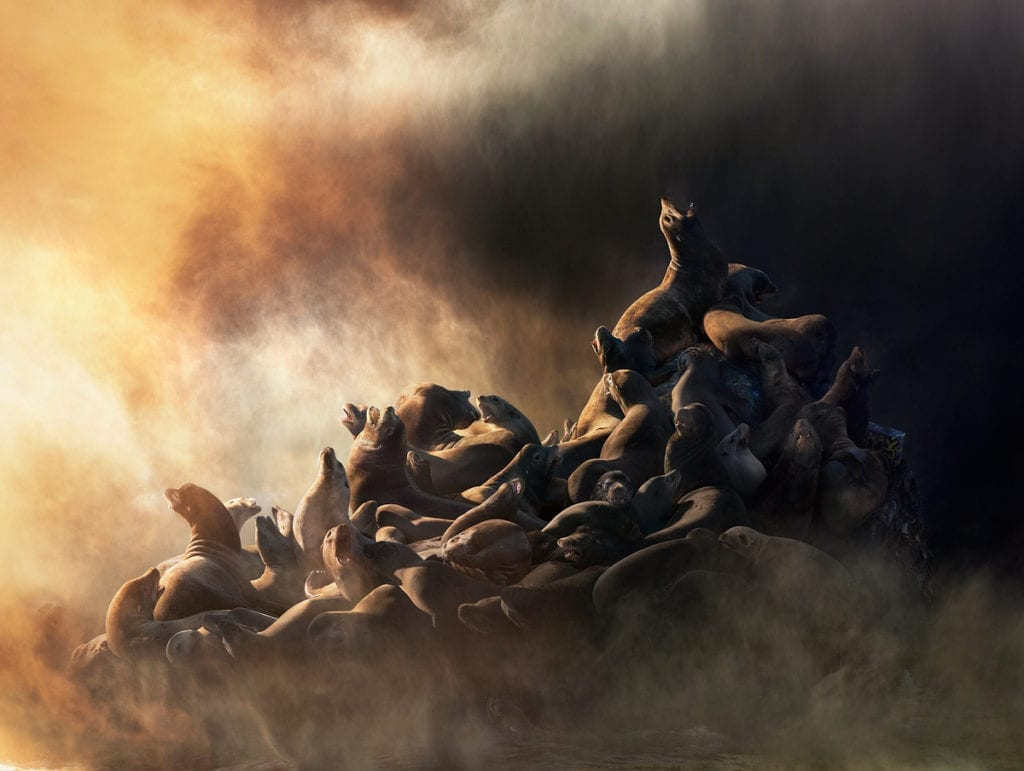 """""""The sea lion image developed over several years. It started with one sea lion in 2005 and then became a group. While kayaking in California a few years ago I photographed sea lions on a rock in the sunset. When I returned to New York I superimposed them onto a black background and they looked like ghosts in a void, which I liked. I went back the following winter and was able to capture the sea lions in the same light. Once I started to piece them together the shapes made an interesting composition, eliminating the ghostly forms of my original sketch. I now had a sense they were on a sinking raft. Interestingly, the name for a group of sea lions is a raft of sea lions. The tension between the sunrise and blackness created a spiritual dynamic, so it all came together in the end."""" Untitled #188 © Simen Johan"""