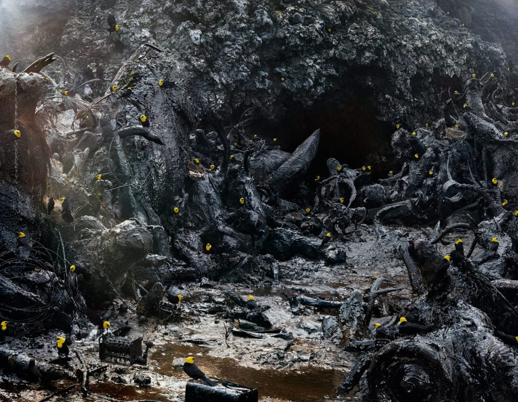 Johan's depiction of Peruvian yellow-hooded blackbirds inhabiting a dystopian setting created with a photograph he took of a tar pit in an Icelandic volcano merged with landfill detritus. Untitled #171 © Simen Johan