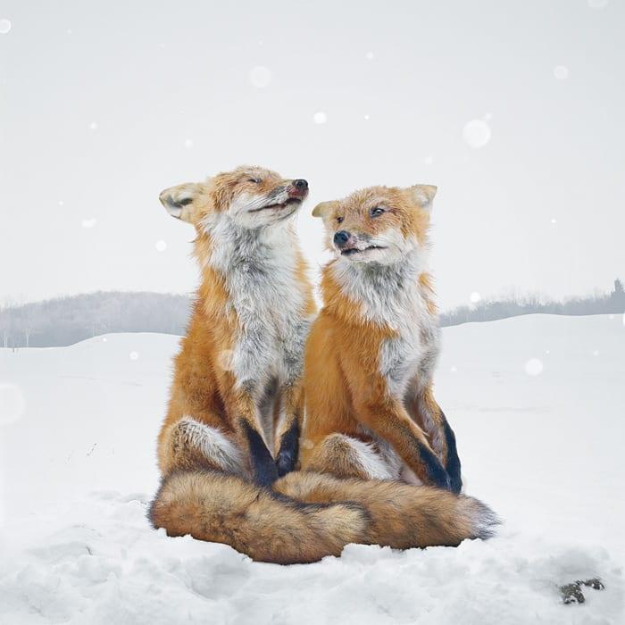 Untitled #136 © Simen Johan