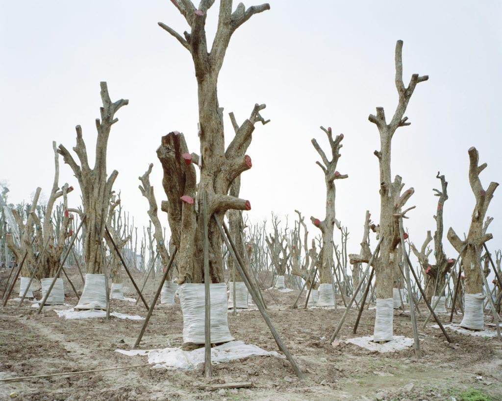Forest #4, 2011 © Yan Wang Preston