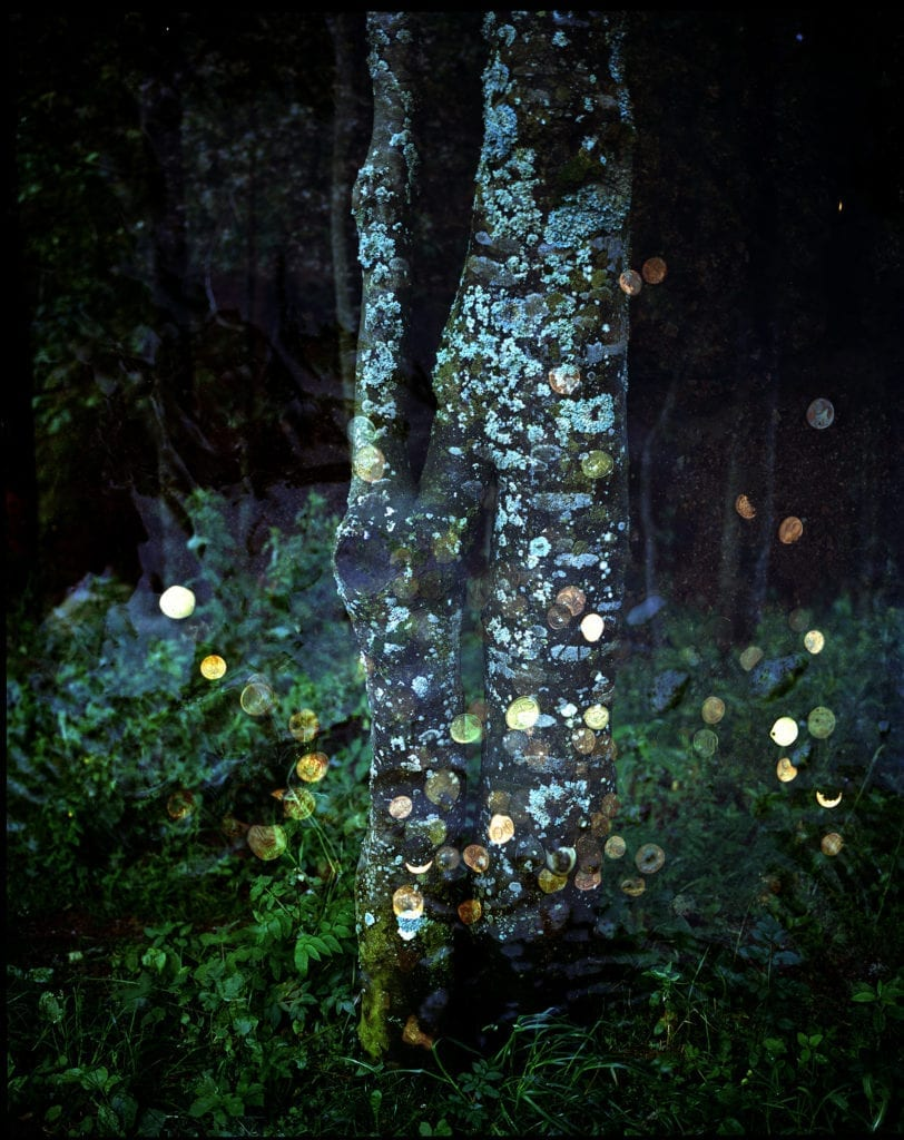 Forest, from the series The Black, 2014 © Kathryn Cook