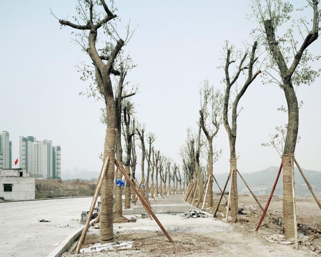 Forest #3, 2011 © Yan Wang Preston