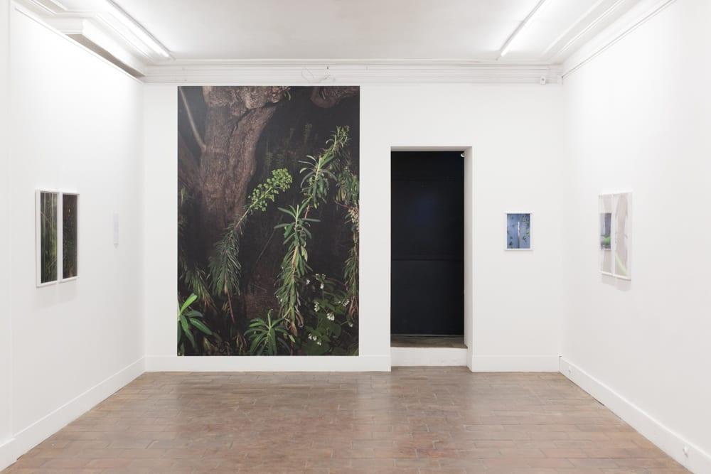 Paul Hutchinson's Wildlife Photography on show at Galerie Mansart, 2016. Installation shot © Paul Hutchinson