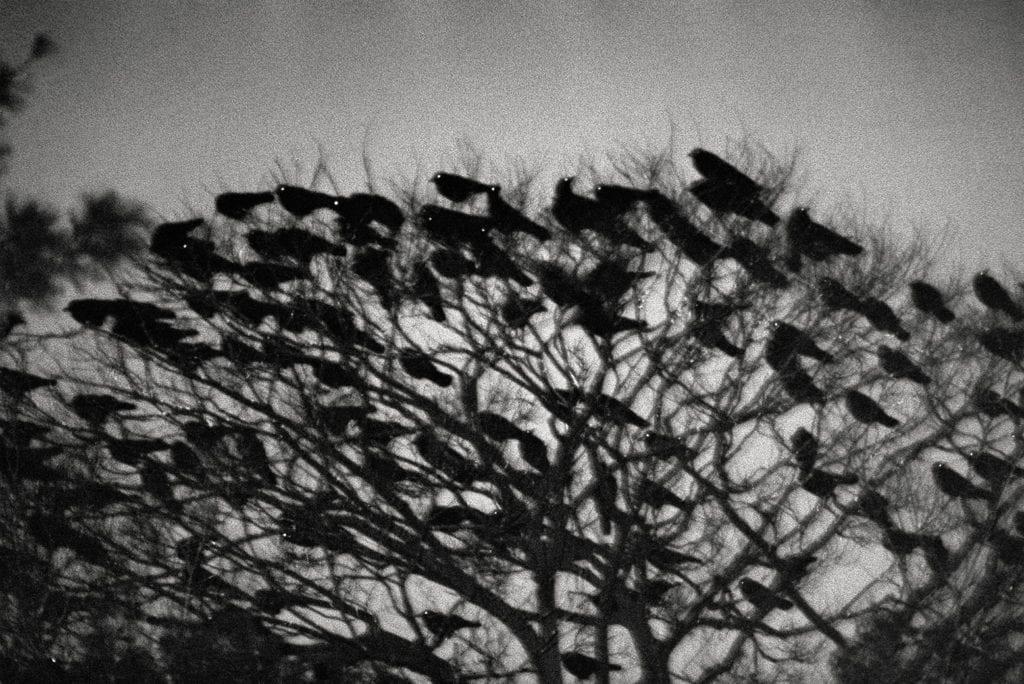 Image by Masahisa Fukase, from Ravens (MACK, 2017). Courtesy of Masahisa Fukase Archives and MACK.