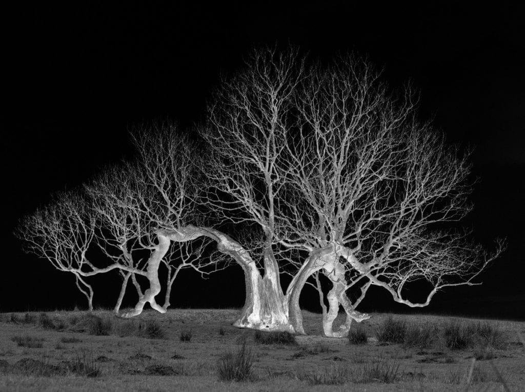 sophy-rickett-dividedtree