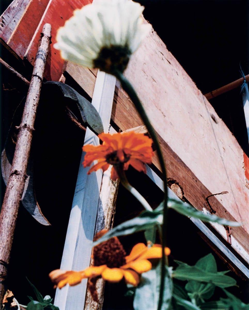 jack_davison_song_flowers_bjp_03
