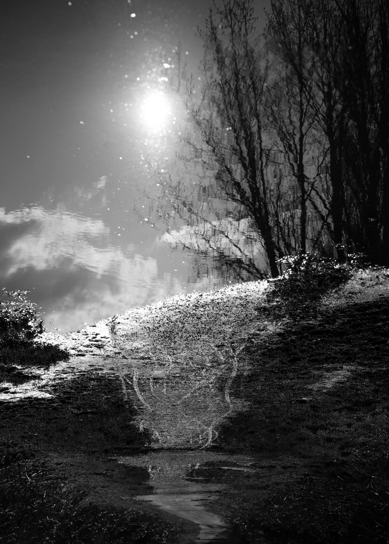 From Path of Pins © Nadja Elinger.